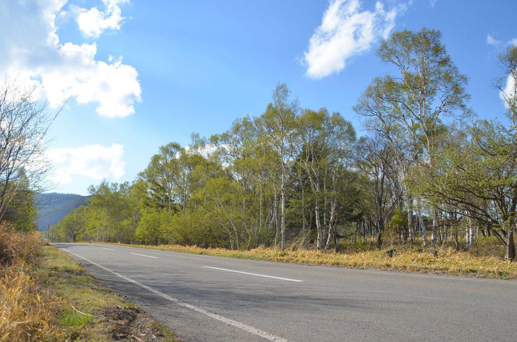外遊び生活向上キャンプブログ 八千穂高原駒出池キャンプ場白樺群生地の画像